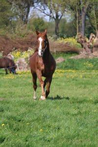 Paardenverzekering Vergelijken