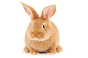 Wat is de beste dierenverzekering