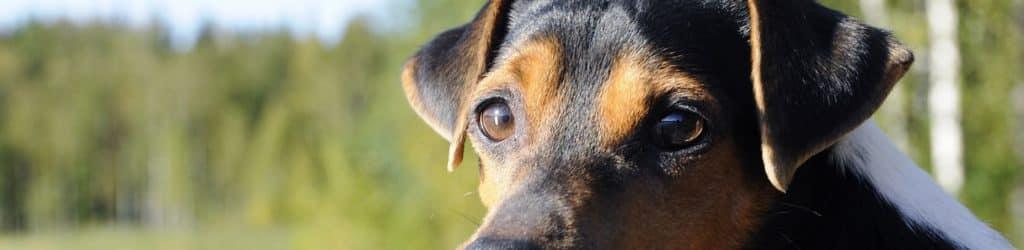 Brazilliaanse hondennamen