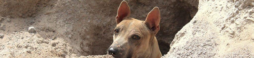 Indiaanse hondennaam
