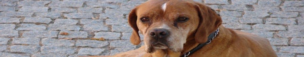 Portugese hondenamen