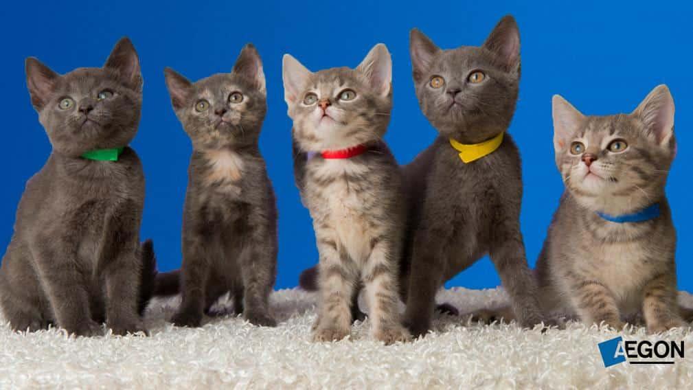 Aegon Dierenverzekering Katten