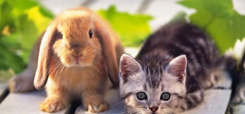 Aegon Dierenverzekering Konijn en Kat