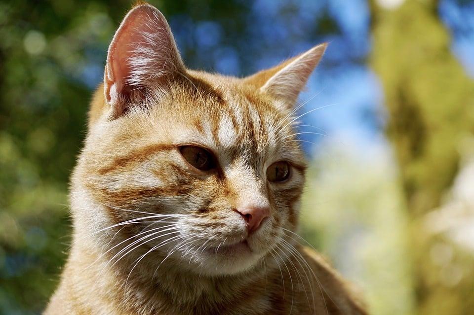 Kosten kat gebitsreiniging