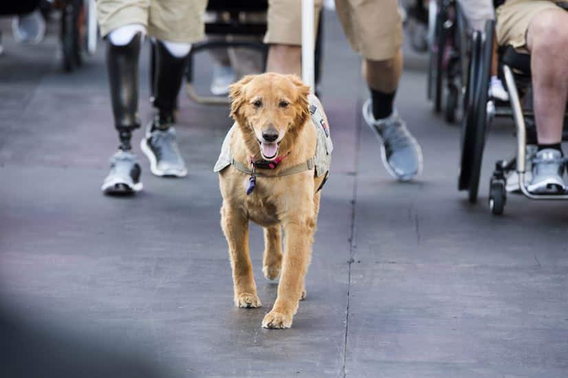 goedkoopste hondenverzekering 2