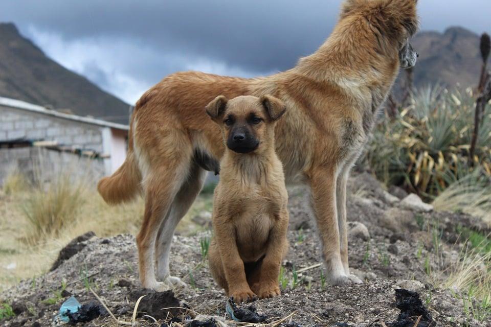 kosten operatie hond