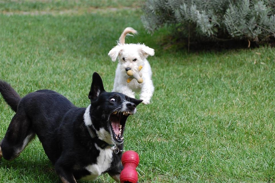 puppy opvoeden A