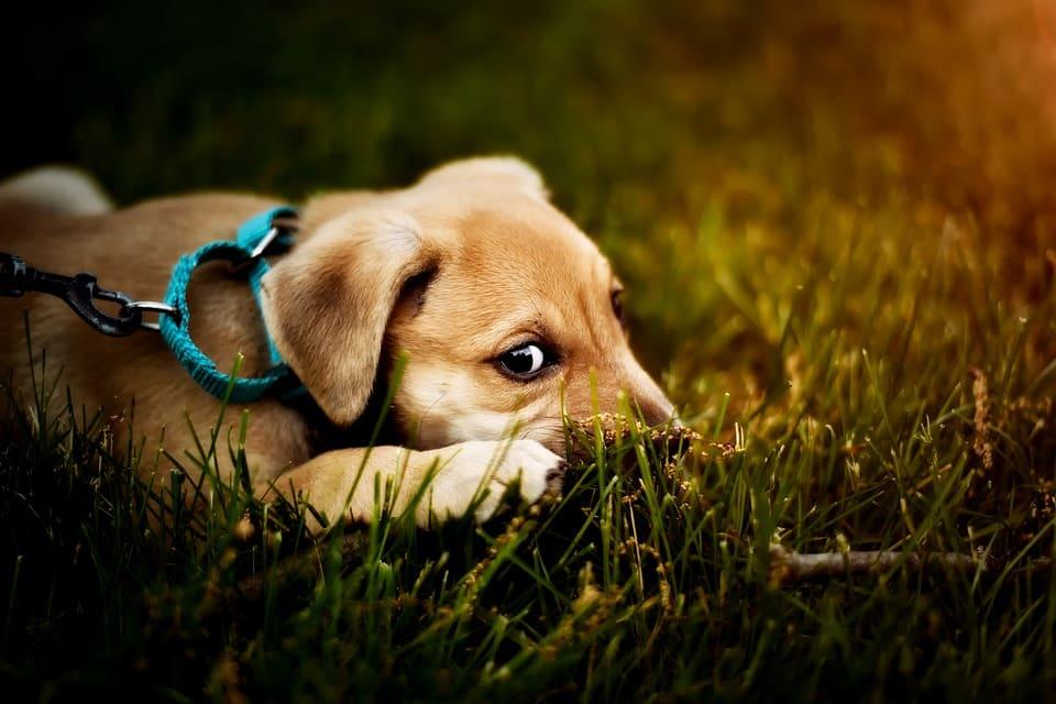 wel of niet verzekeren hond 2
