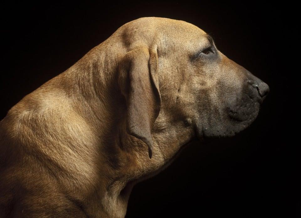 welke hond