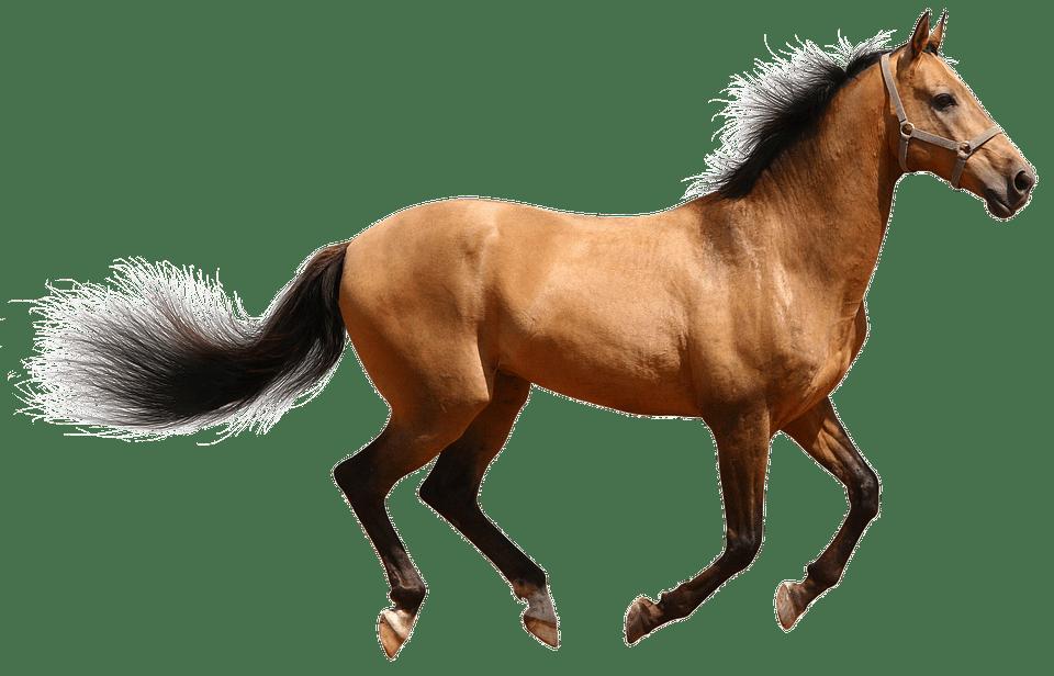 Paardenverzekering - Dierenverzekering-vergelijken.nl