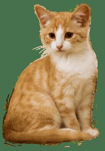 Petplan Kattenverzekering